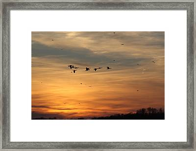 Geese In Sunset Framed Print