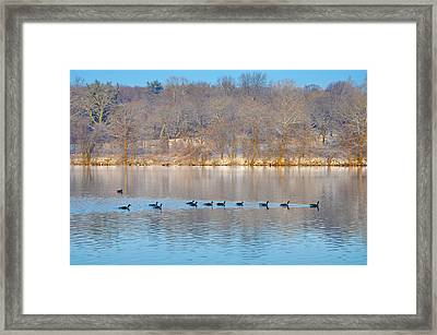 Geese In The Schuylkill River Framed Print by Bill Cannon