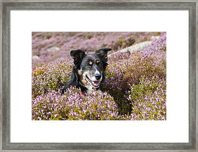 Gelert - My Dog Framed Print by Rory Trappe
