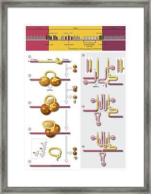 Gene Splicing, Diagram Framed Print by Art For Science