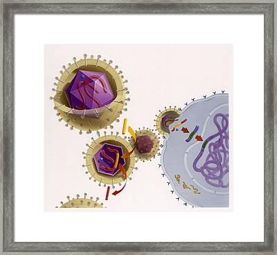 Genetic Engineering Is Used Framed Print