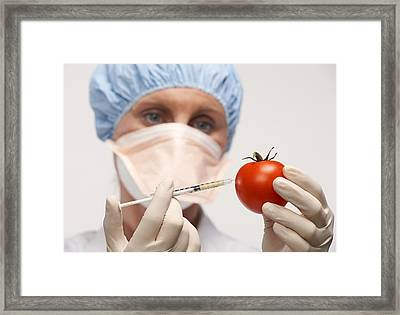 Genetically Engineered Tomato Framed Print by Mark Sykes