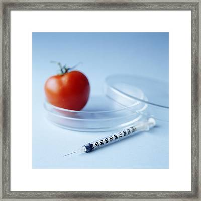 Genetically Modified Tomato Framed Print