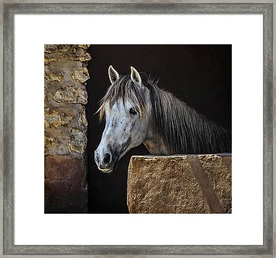 Gentle Beauty In Morocco Framed Print by Marion McCristall