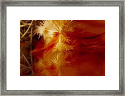 Gentle Fire Framed Print by Elizabeth Wilson