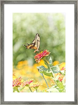 Gentle Landing Framed Print by Straublund Photography