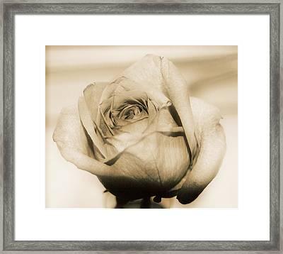 Gentle One Framed Print by Gloria Warren