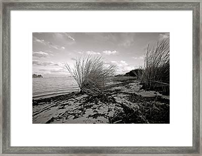 Gentle River Tide Framed Print by Laura DAddona