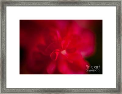 Gentle Softness Framed Print by Venura Herath