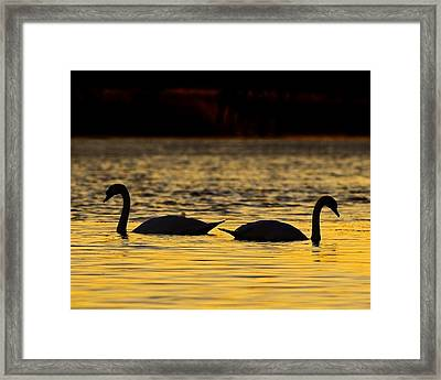 Gently Apart Framed Print by Tony Beck