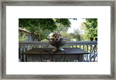 George In A Bowl Framed Print by Mark Haley