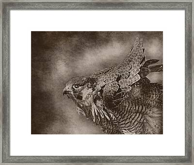 Georgette In Black And White Framed Print