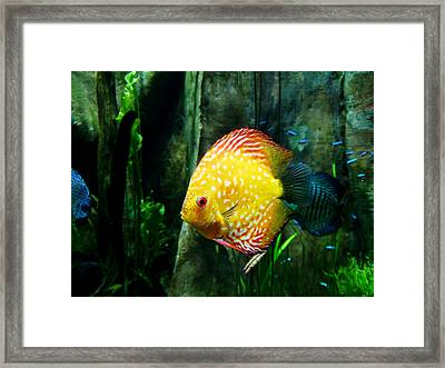 Framed Print featuring the photograph Georgia Aquarium 001 by George Bostian