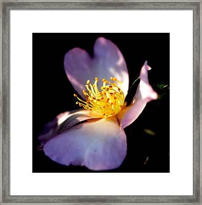 Georgia Gardenia Garden Framed Print by Tanya Tanski