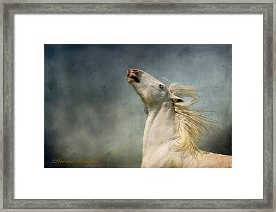 Georgiano Cavalli Framed Print by Dorota Kudyba