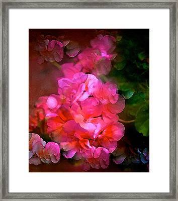 Geranium 9 Framed Print by Pamela Cooper