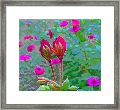 Geranium Buds And Zinnia Framed Print by Padre Art