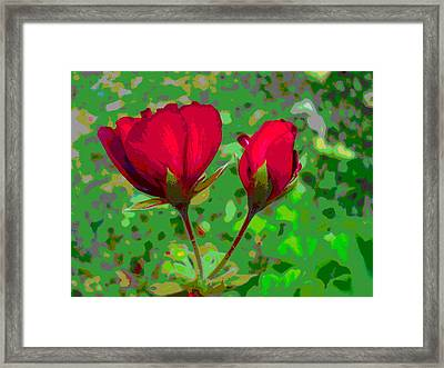 Geranium Flower And Bud Closeup Framed Print by Padre Art