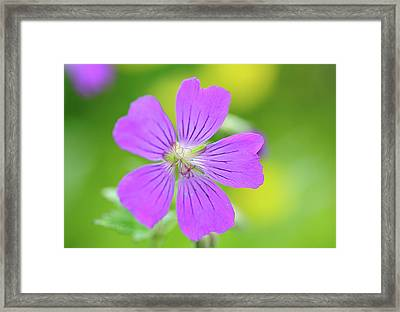 Geranium Flower Framed Print