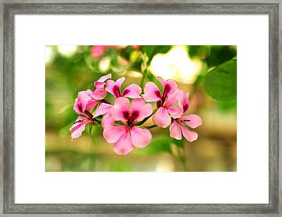 Framed Print featuring the photograph Geranium  by Puzzles Shum