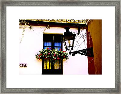 Framed Print featuring the photograph Geraniums And Light by Rick Bragan