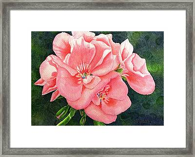 Geraniums Framed Print by Debra Spinks