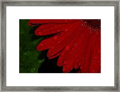 Gerber 28 Framed Print by Kennith Mccoy
