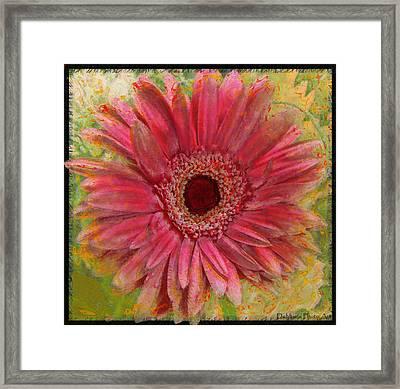 Gerber Photoart Framed Print by Debbie Portwood