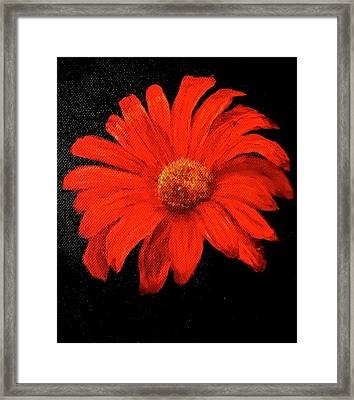 Gerbera Framed Print by Heather Matthews