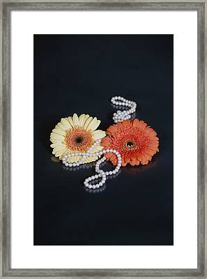 Gerberas With Pearls Framed Print by Joana Kruse