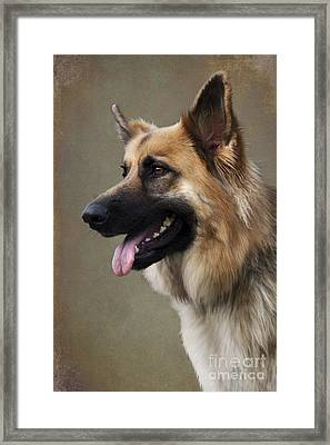 German Shepherd Dog Framed Print