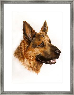 German Sheppard Framed Print