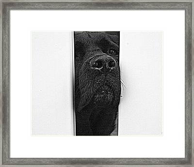 Get Me Outta Here Framed Print