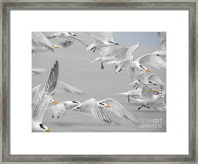Get The Flock Outta Here Framed Print by Jack Norton