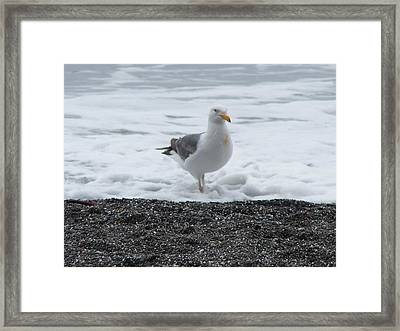 Get Your Feet Wet Framed Print