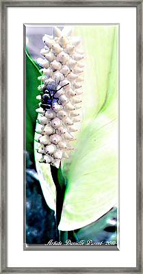Get Your Own Flower Framed Print by Danielle  Parent