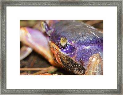 Getting Antsy Framed Print by Lynda Dawson-Youngclaus