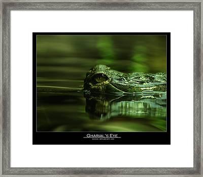 Gharial's Eye Framed Print by Leito R