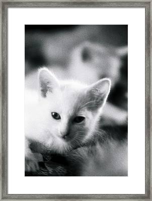 Ghost Kitties Framed Print
