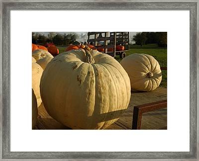 Ghost Pumpkin Framed Print by LeeAnn McLaneGoetz McLaneGoetzStudioLLCcom