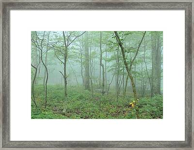 Ghost Trees Framed Print by