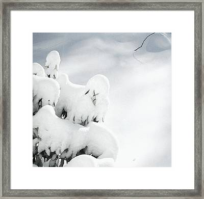 Framed Print featuring the photograph Ghostly Snow Covered Bush by Pamela Hyde Wilson