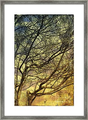 Ghosts Of Crape Myrtles Framed Print by Judi Bagwell
