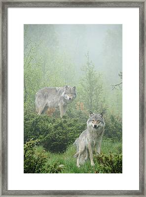Ghosts Of The Forest Framed Print