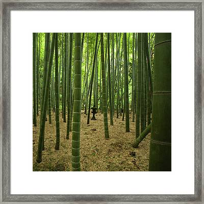 Giant Bamboo Forest With Stone Lantern, Japan Framed Print