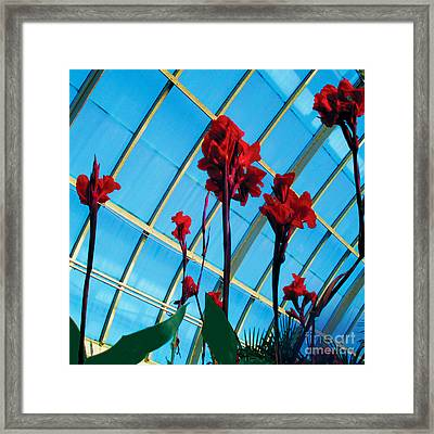Framed Print featuring the photograph Giant Canna Lilly by David Klaboe