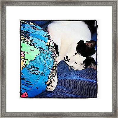 Giant Cat Attacks The World #fun #cats Framed Print