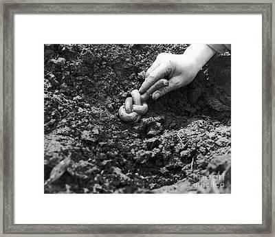 Giant Earthworm Framed Print by Omikron