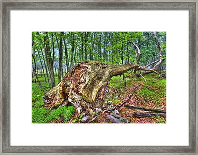 Giant Is Down Framed Print