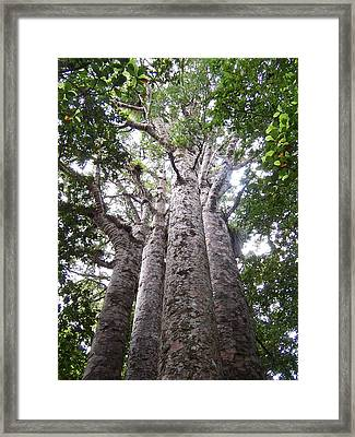 Framed Print featuring the photograph Giant Kauri Grove by Peter Mooyman